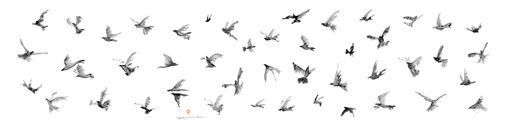 47-birds-numbered-martin-azua-11